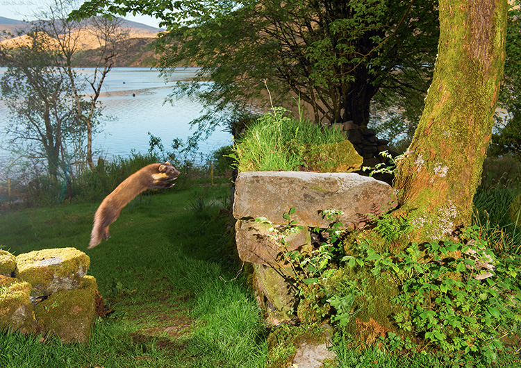 "Pine Marten: ""Early"" takes off"