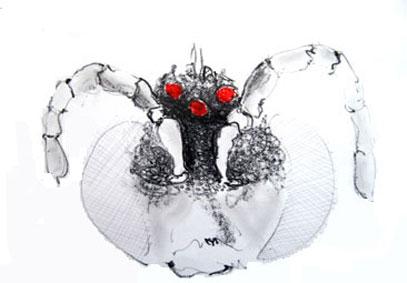 bee head drawing 3
