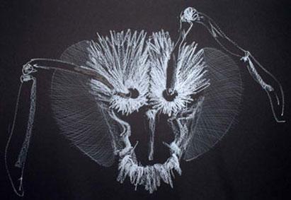 bee head drawing 6