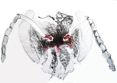 bee head drawing 4