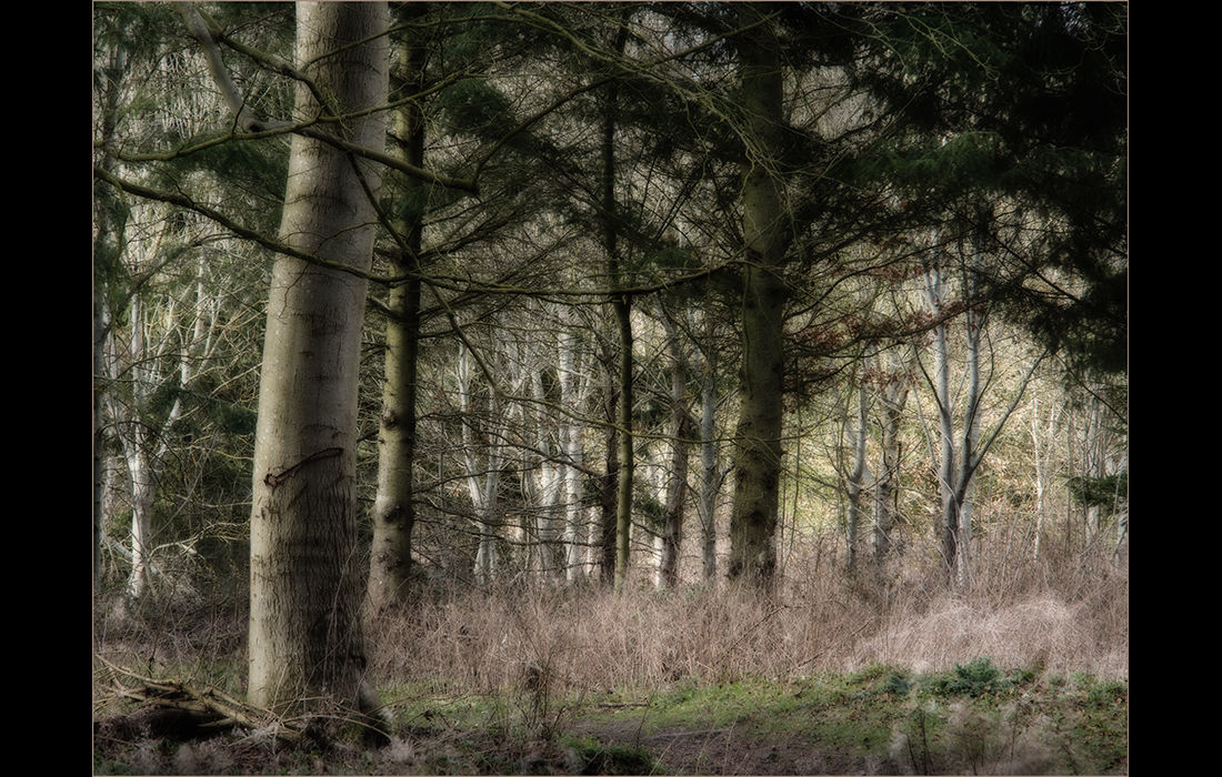 Ardington Wood, West Hendred