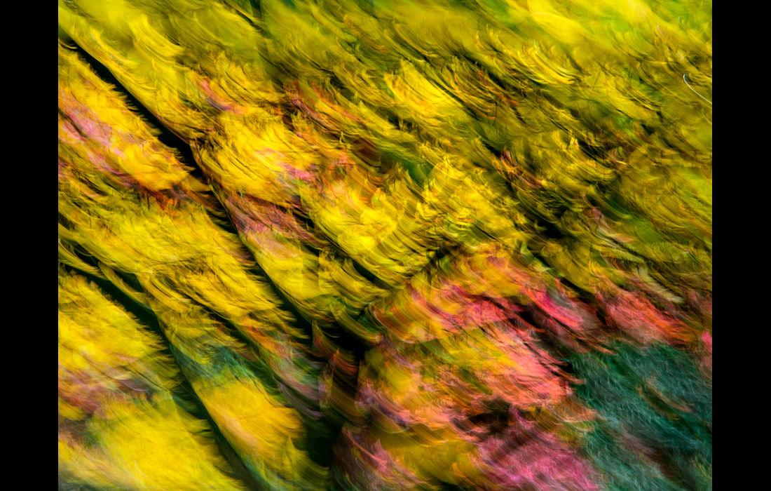 Autumn impressions 1 (right image)