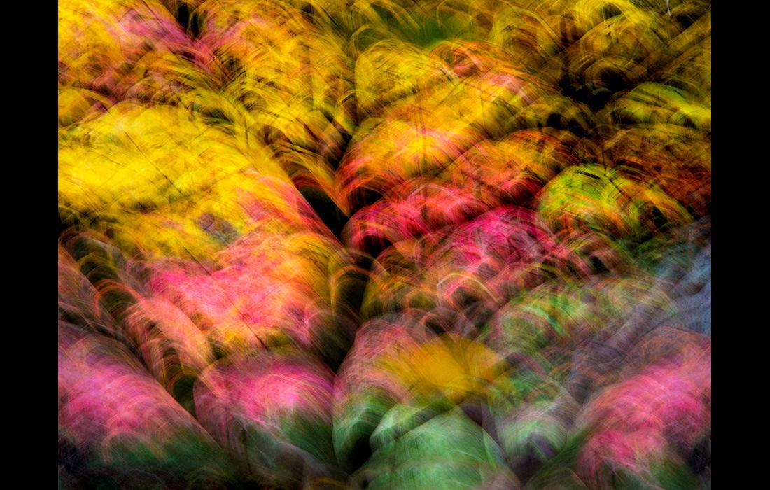 Autumn imressions 1 (centre image)