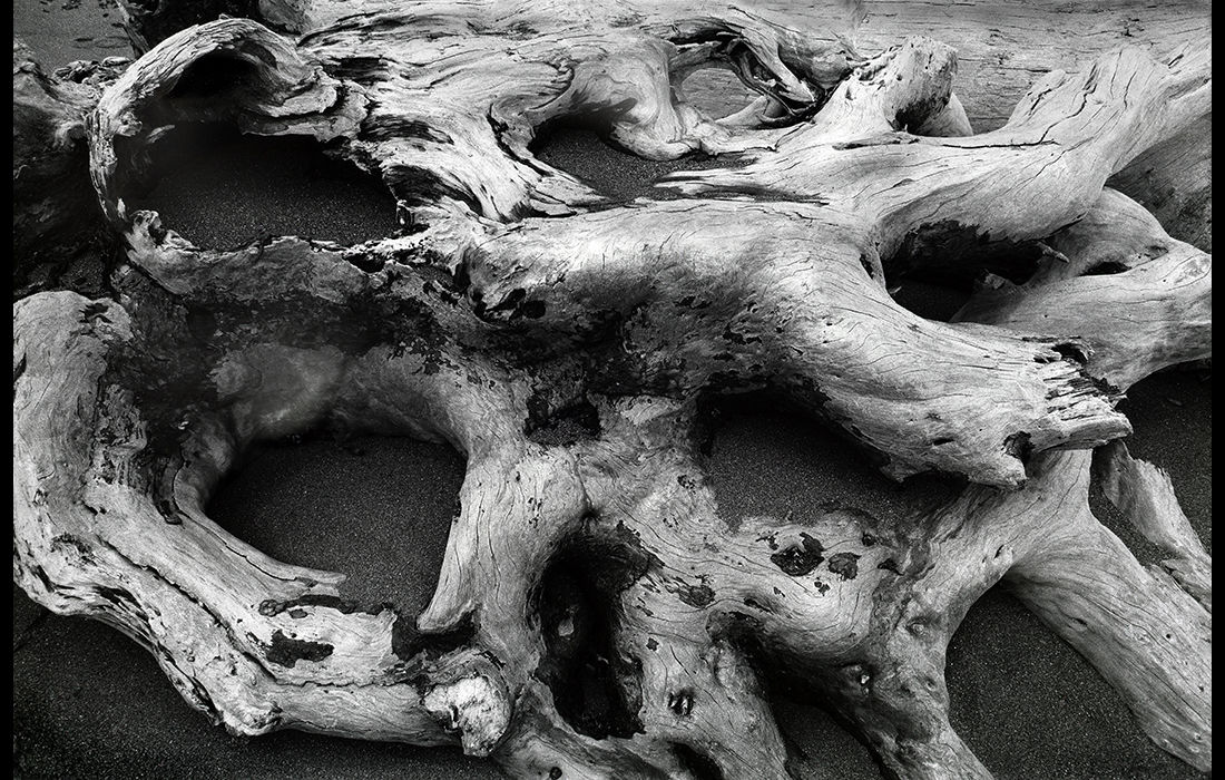 Driftwood, Shi Shi Beach, Washington State, USA 1988