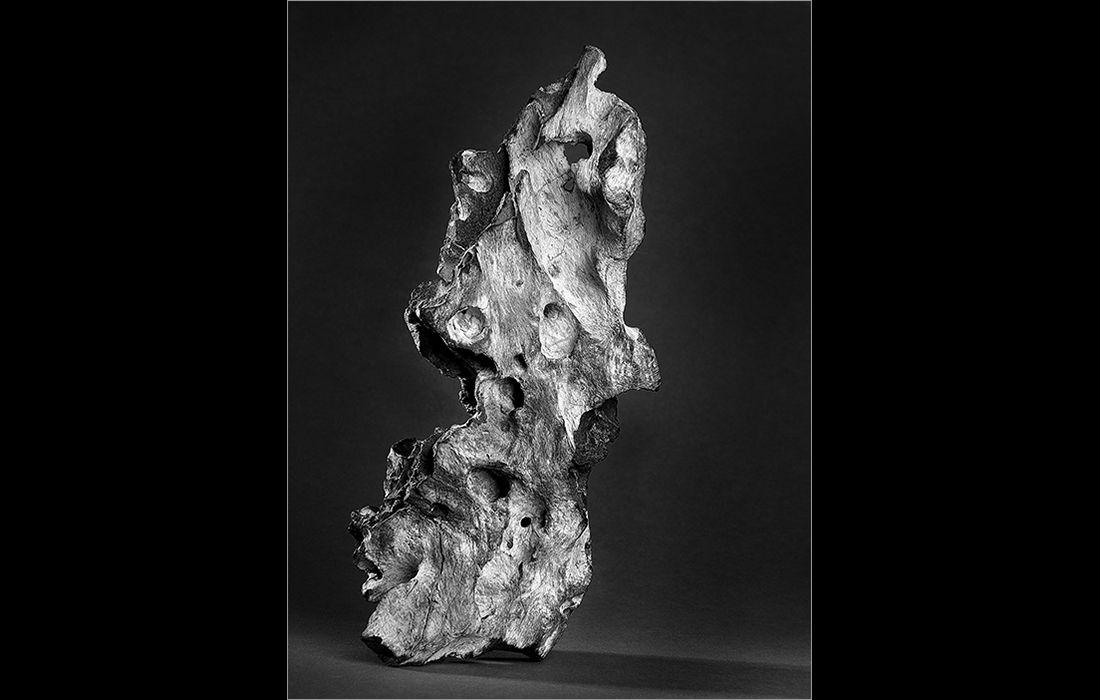 Fossilized driftwood (left image)