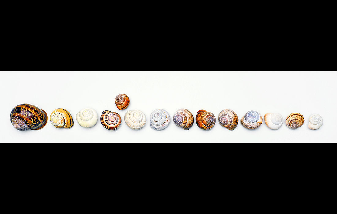 Fourteen shells (left image)