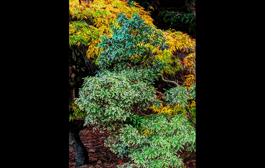 Green tree, yellow tree