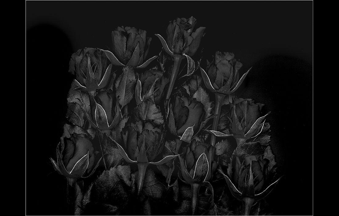 Mutation1: Roses