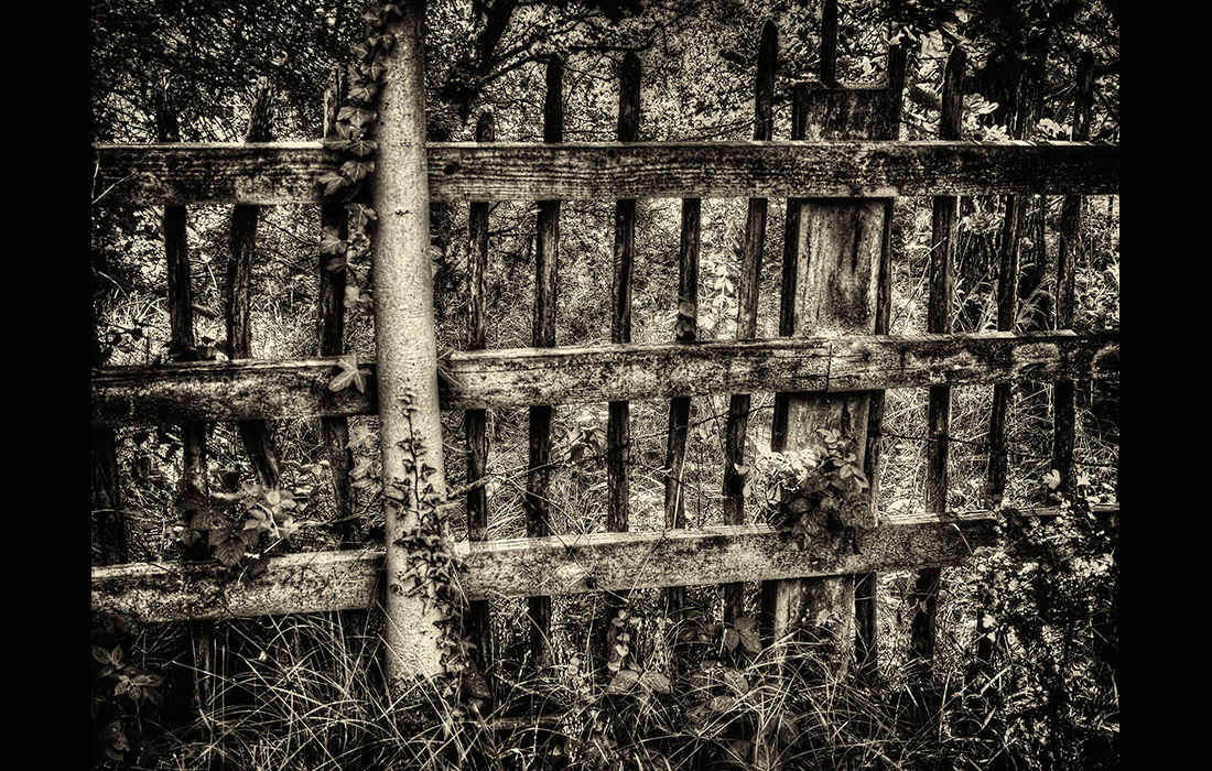 Neglected fence