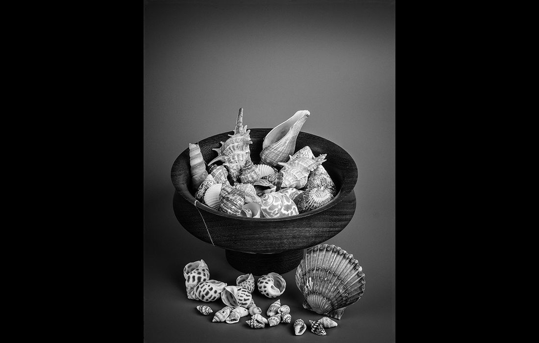 Shells and a turned wooden bowl