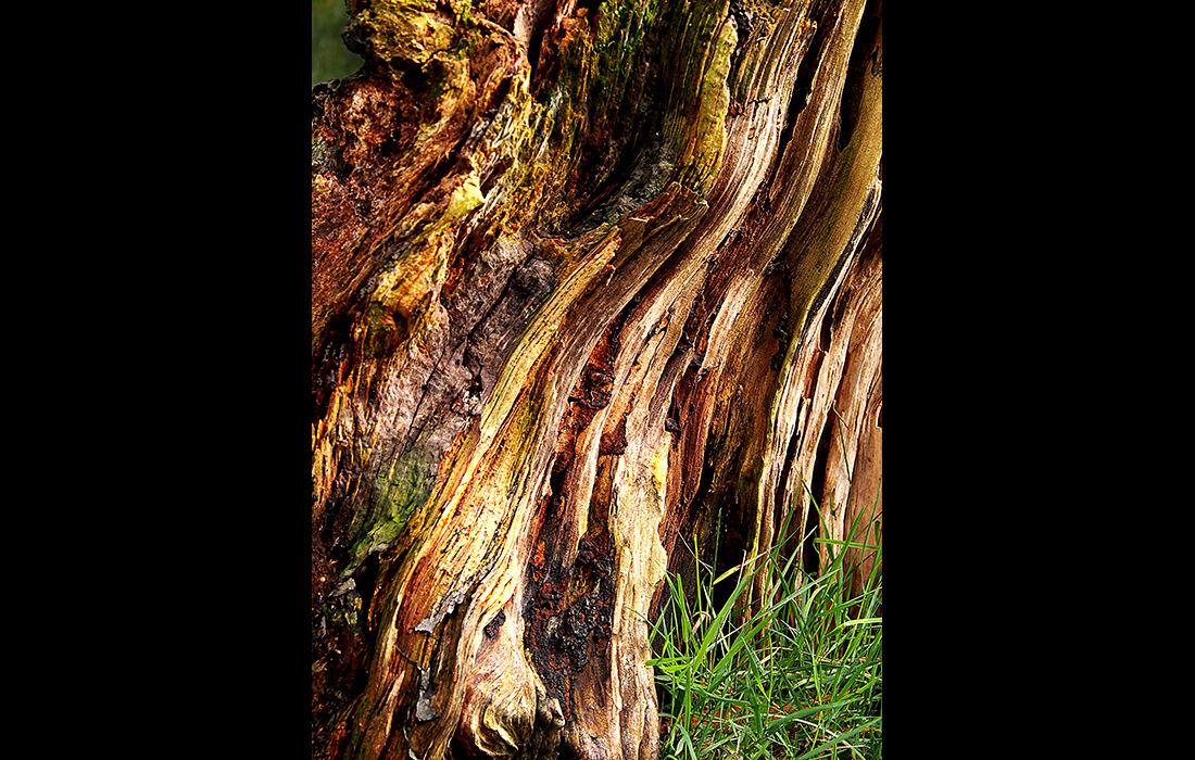 Tree trunk 4
