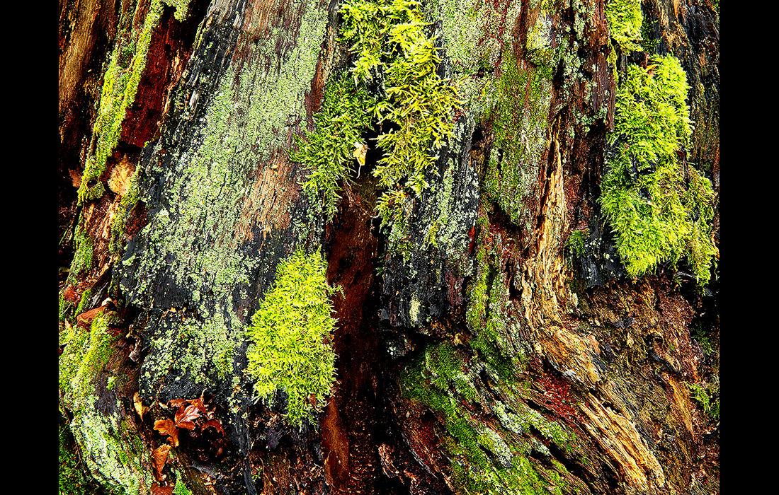 Tree trunk 1