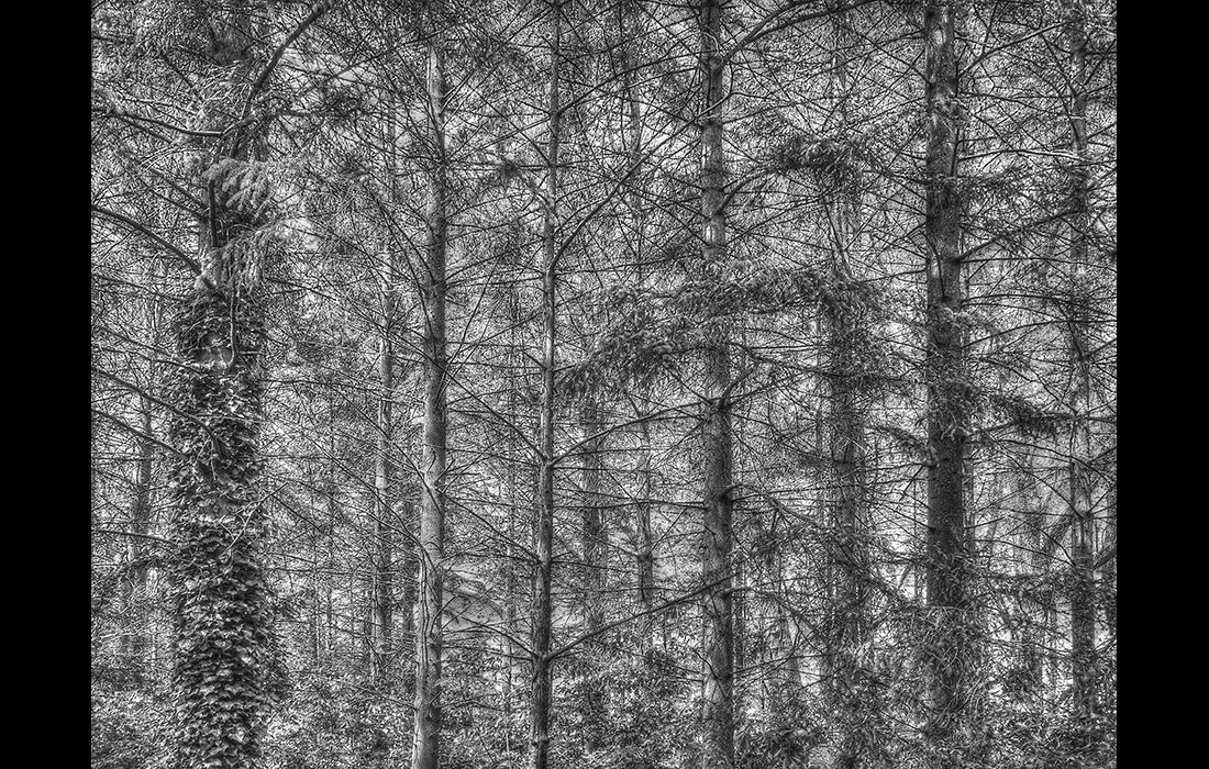 A screen of trees