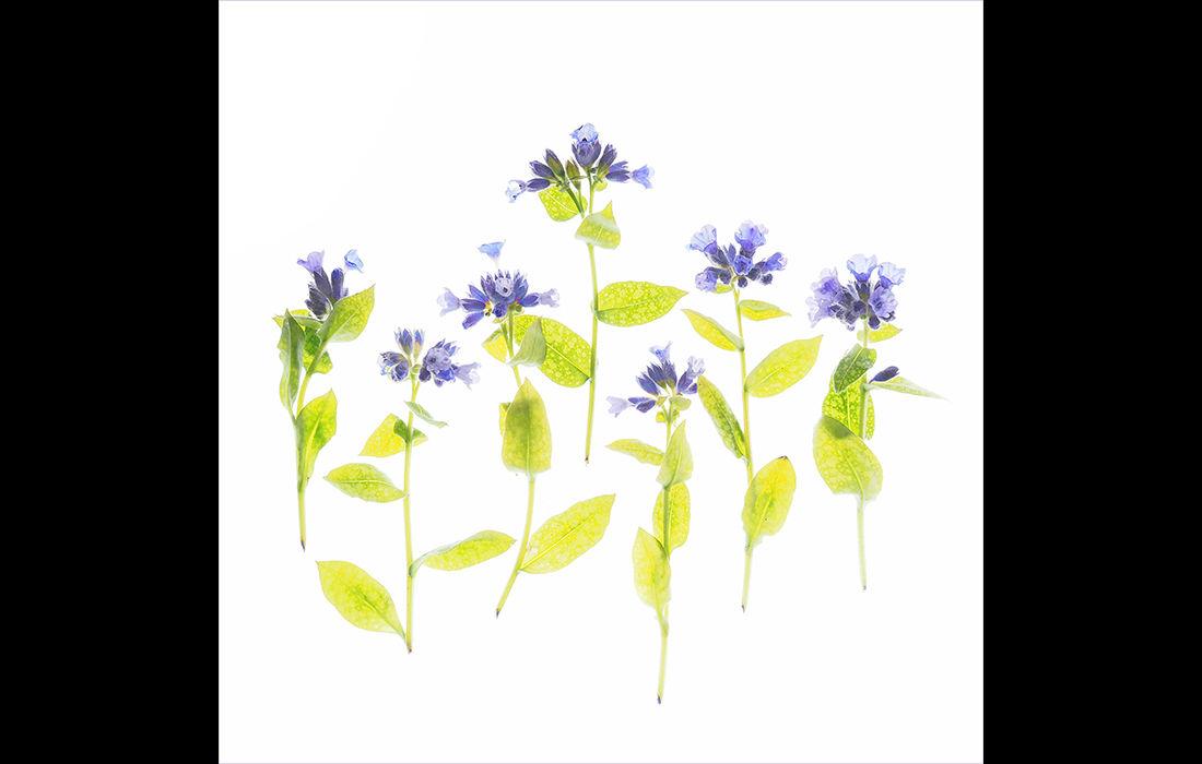 Weeds (left image)