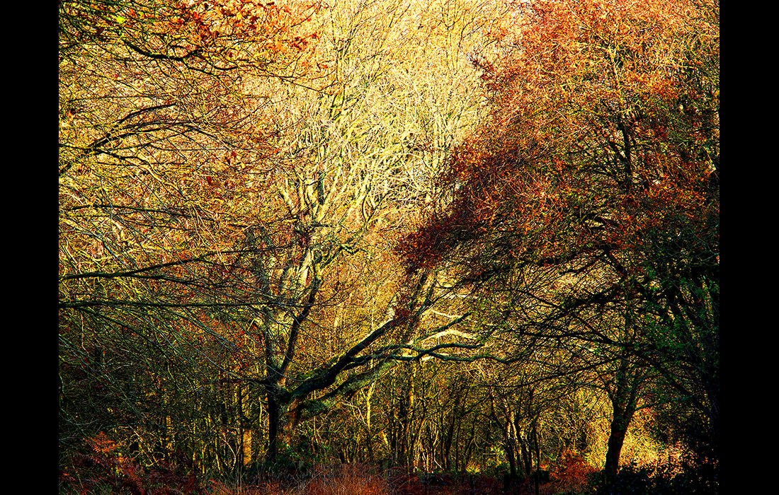 Woodland Autumn