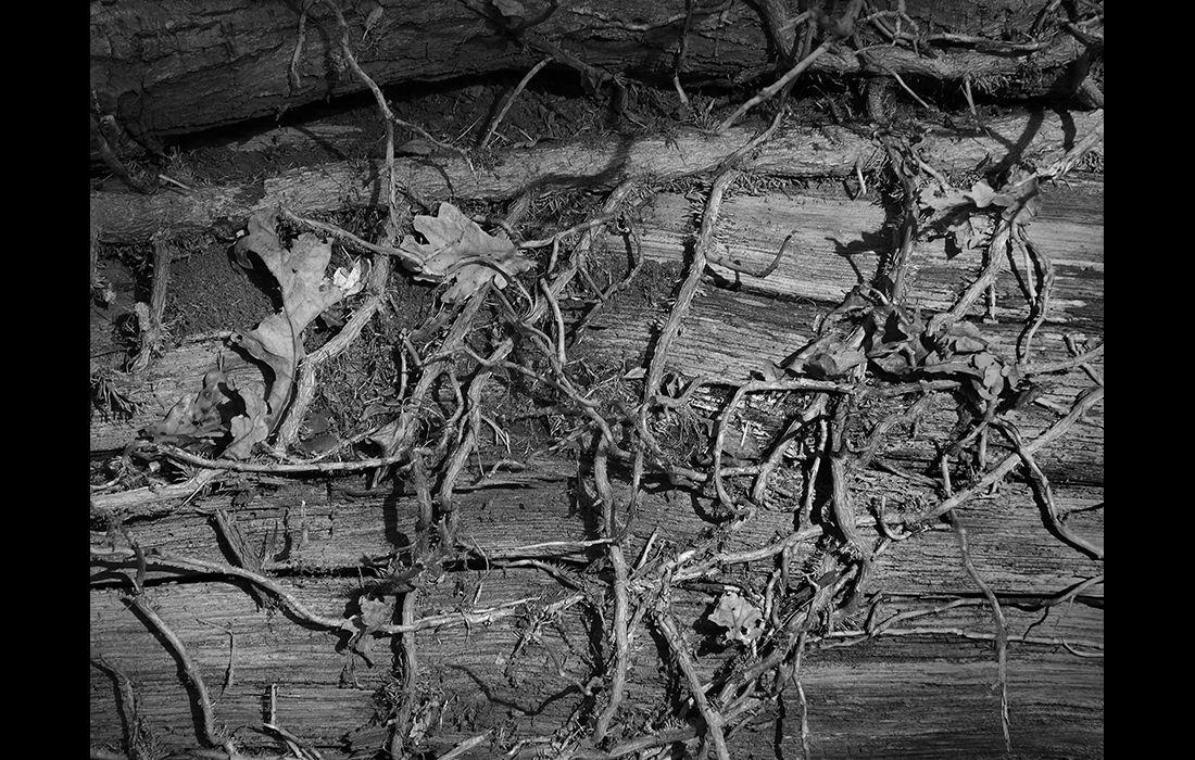 Woodland death