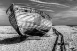 Dungeness 11