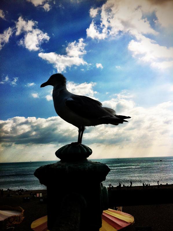 Big bird.