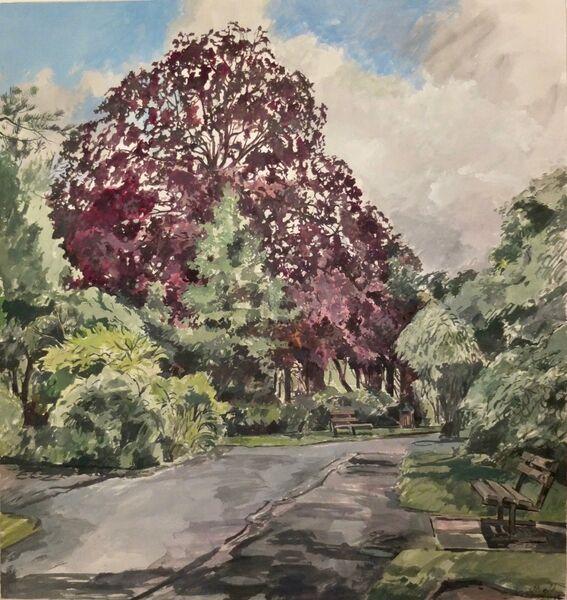 Beech tree, Priory Park