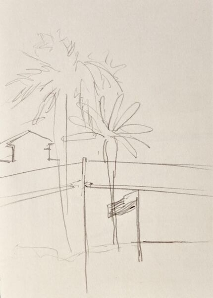 Palms and flag