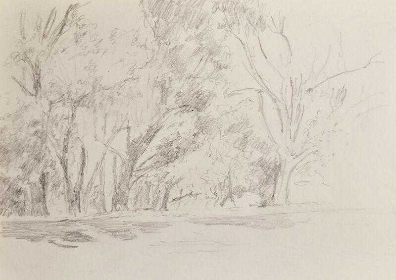 Row of trees, Alexandra Park