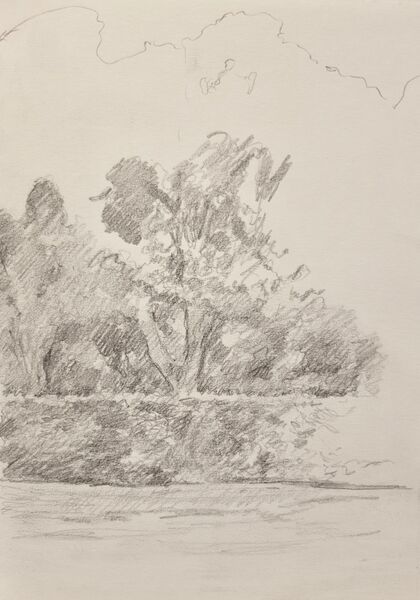 Trees behind a tall hedge
