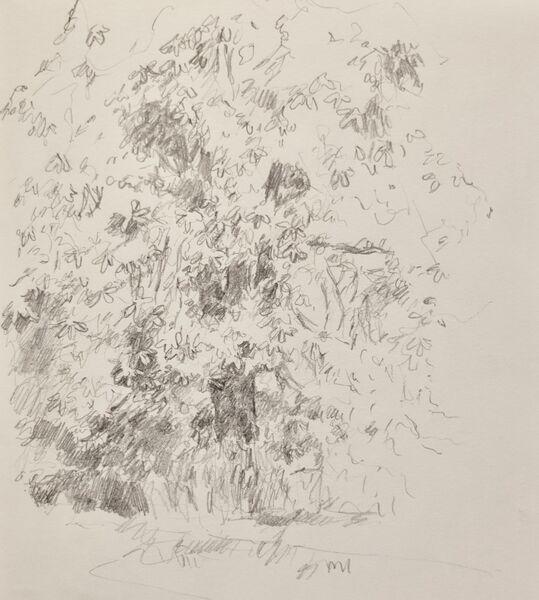 Chesnut tree, Alexandra Park