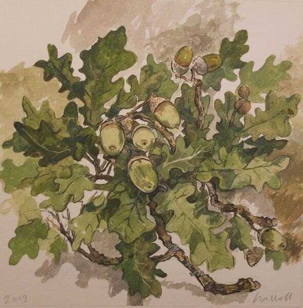 Oak leaves 1
