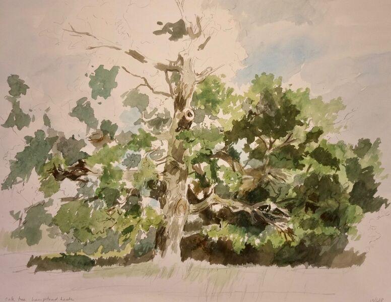 Oak tree, Hampstead Heath 2