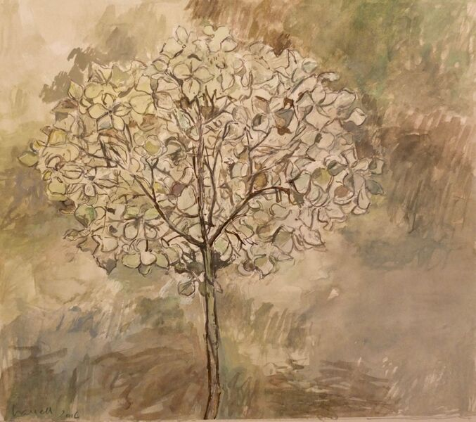 Pale hydrangea