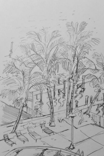 Palms and sunbeds 1