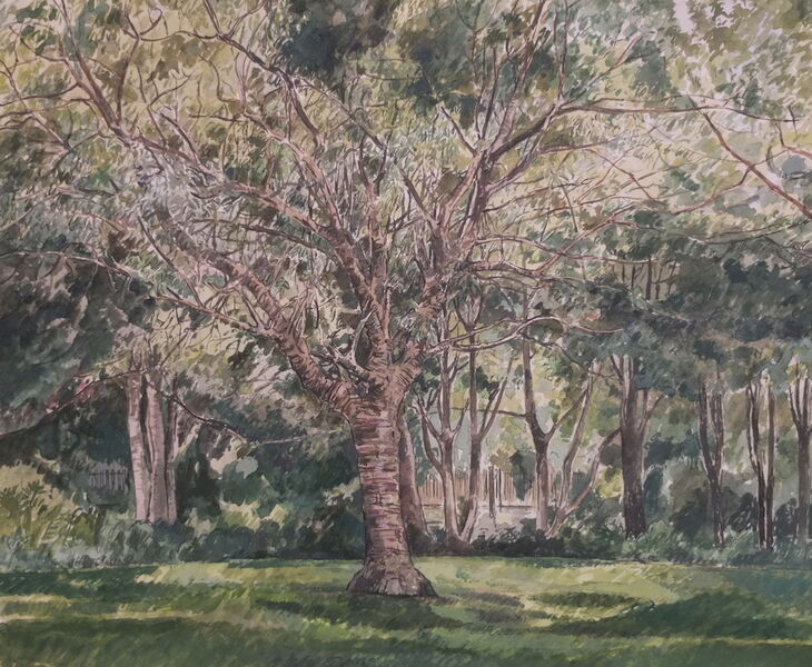 Priory Park 3