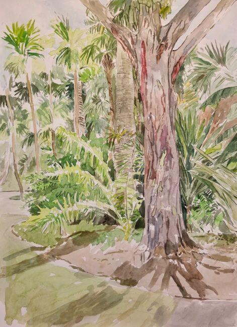 Rainbow Eucalyptus, Miami Beach Botanical Garden
