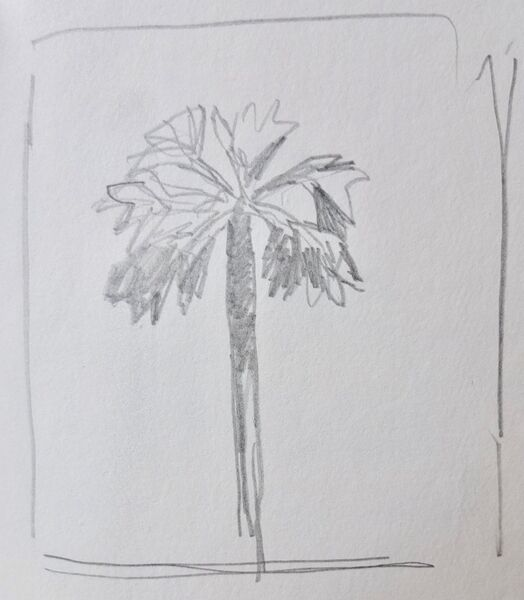 Solitary palm 1