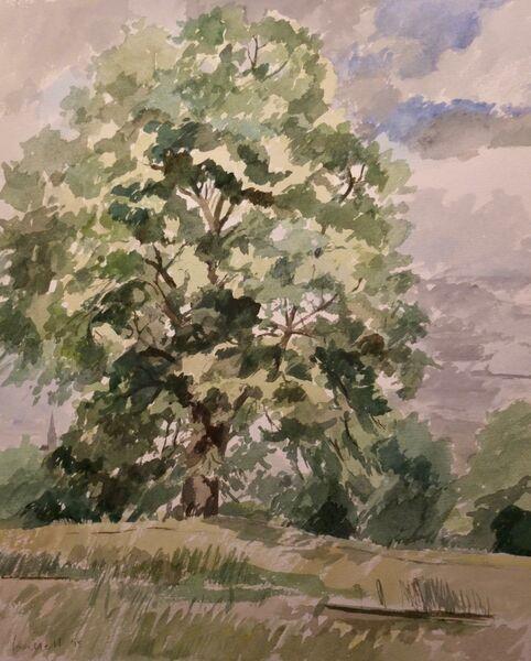 Tree, Hampstead Heath 1