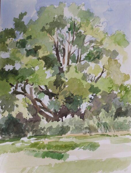 Tree, Hampstead Heath 2