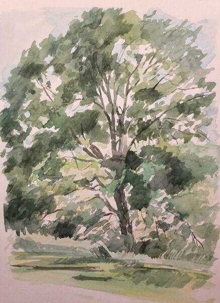 Tree, Kenwood House