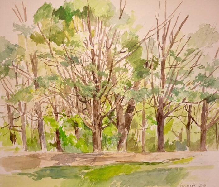 Trees, Alexandra Park 1