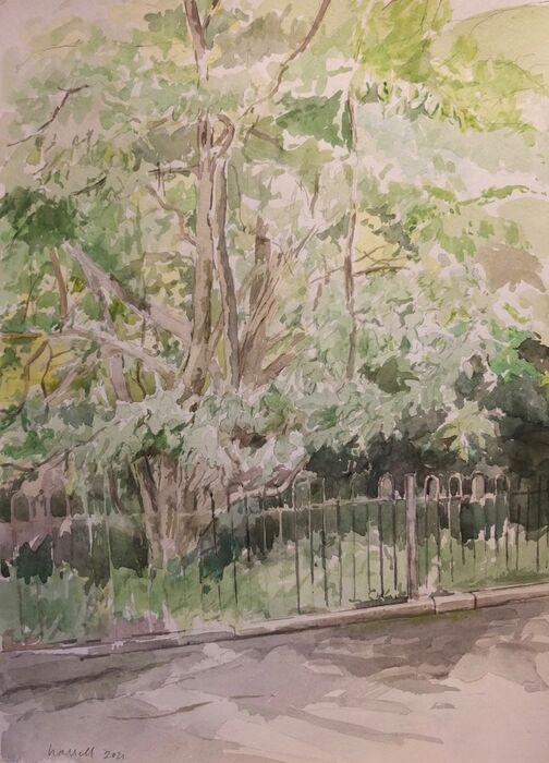 Tree and railings, Waterlow Park