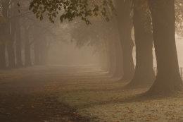Misty Autumn Avenue