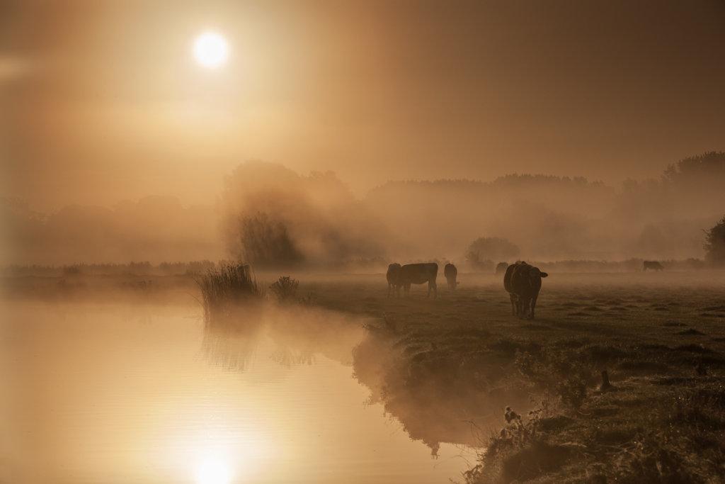 Meadow Ladies in the mist