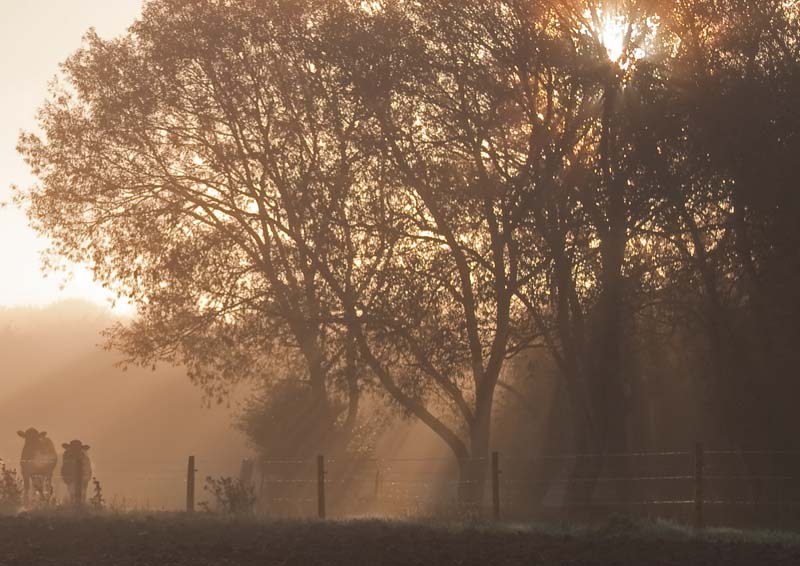 Misty Oxfordshire countryside