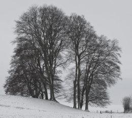 Avebury trees
