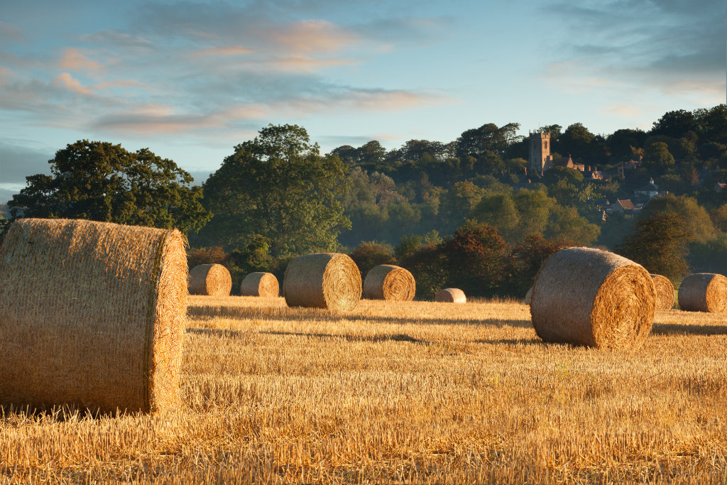 Harvest Time at Coleshill