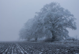 Hoarfrost on the Marlborough Downs