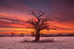 Single Tree at Sunrise