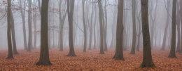 Mist filled woodland at Badbury clump