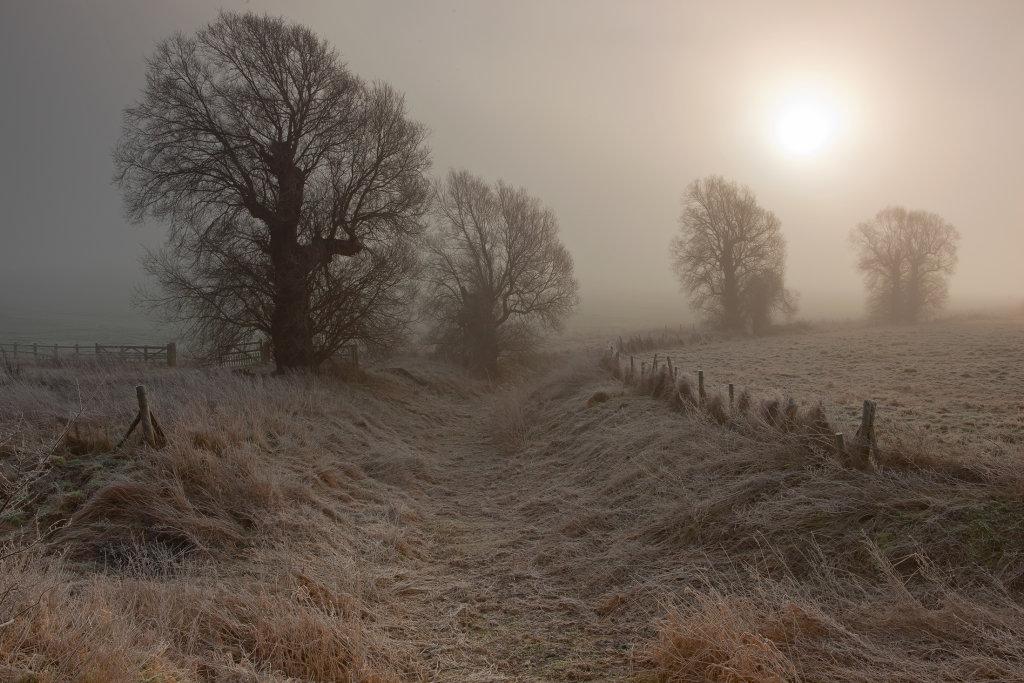 Along the Winterbourne Near Avebury