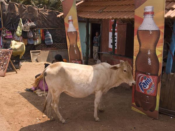 Anguna 2 Goa