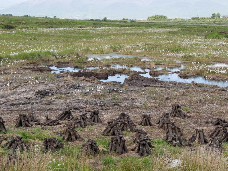 Peat Bog Ireland